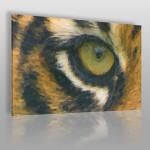 obraz z tygrysem