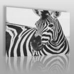obraz z zebrą w paski