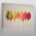 fotoobraz inspirowany jesienią