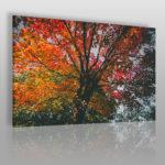 fotoobraz z jesiennym drzewem