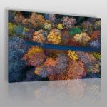 fotoobraz z jesiennym lasem